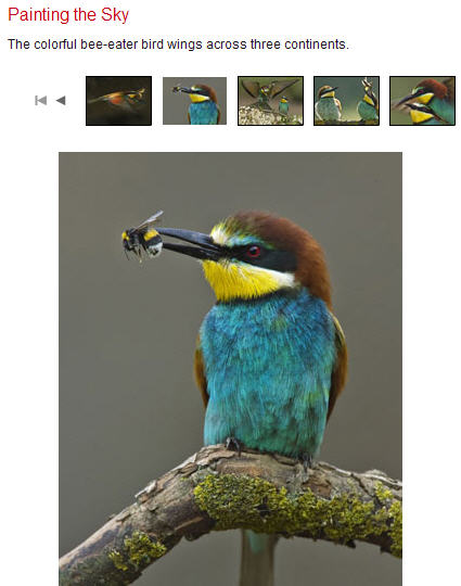 Jozsef Szentpeteri's cool photos of colorful, bee-eating birds